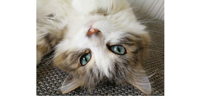 Première galerie des plus belles photos de vos chats.