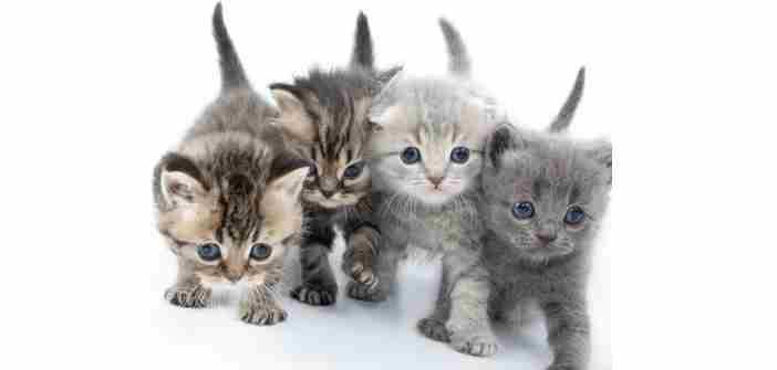 En 2017,  « Nala » gagne le palmarès des noms de chats…