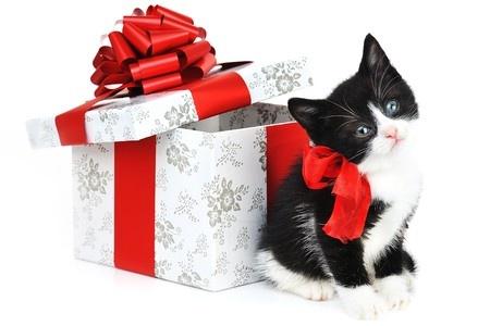 89 des propri taires de chats ont l 39 intention d 39 offrir un cadeau de no l leur chat. Black Bedroom Furniture Sets. Home Design Ideas