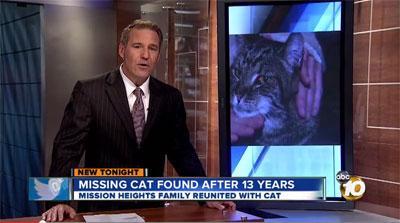 Bandit un chat américain retrouve après 13 ans d'absence ses maîtres