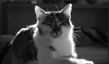 Brutus comme un felis silvestris.