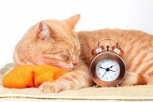 Le chat donne aussi l'heure !