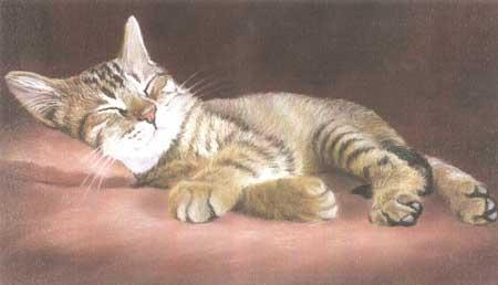 Le chat endormi de Sanchez