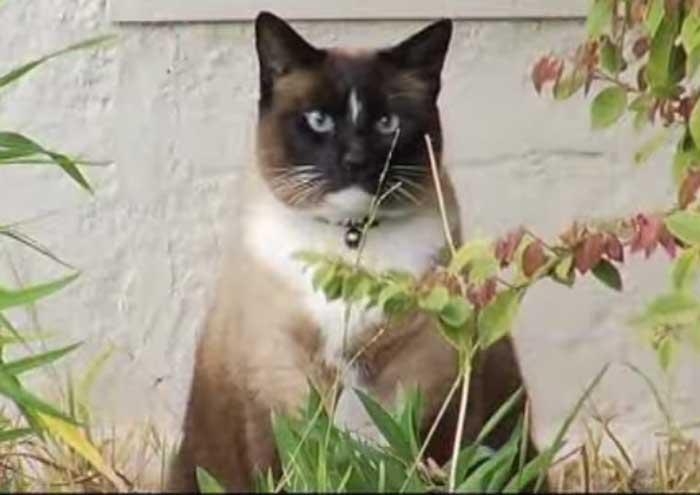 L'histoire étonnante de  Dusty, le chat kleptomane !