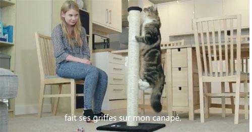 Feliscratch by Feliway : Votre chat ne griffe plus le canapé, le tapis, le montant de l'armoire…