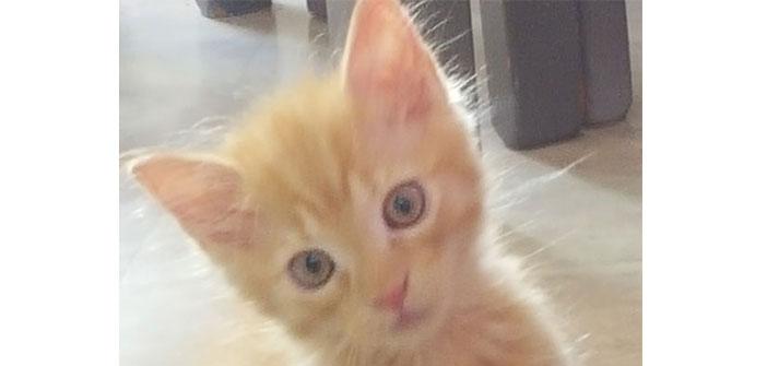 Deuxième galerie des plus belles photos de vos chats