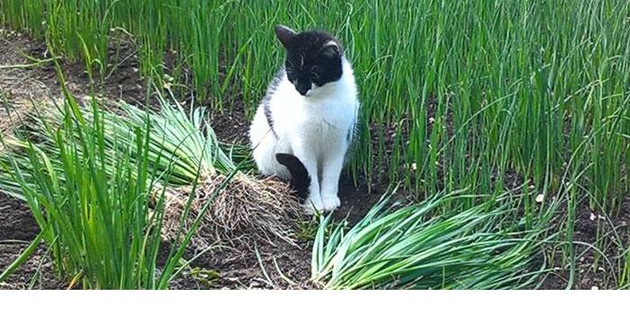 Troisième galerie des plus belles photos de vos chats.