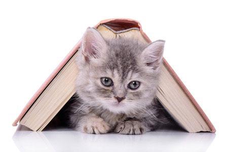 Micetto vous propose un jeu : publier vos plus belles histoires de chats et élire la plus belle...