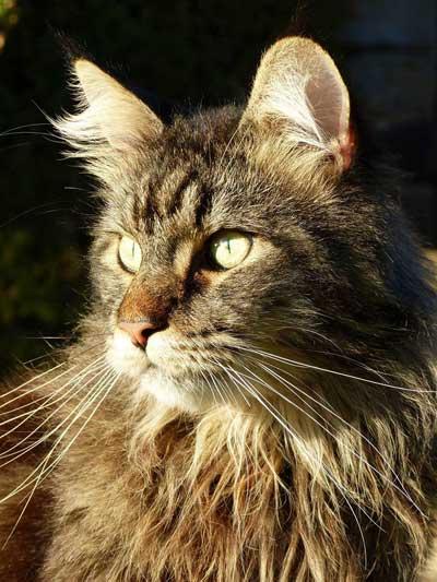 Pour Jupiter, un chat, tué d'une balle en pleine tête et pour que la justice passe.