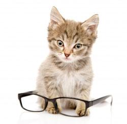 Un chat à lunettes pour une meilleure vision