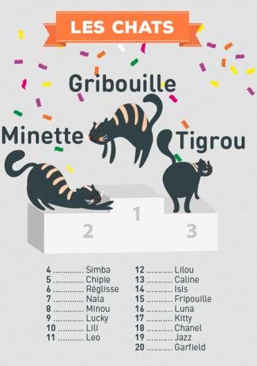 Gribouille, Minette, Tigrou, le palmarès des noms des chats 2015...