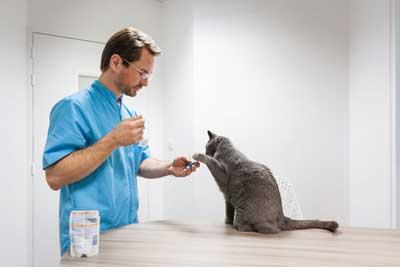 Un vétérinaire du pays Nantais ne soigne que les chats !