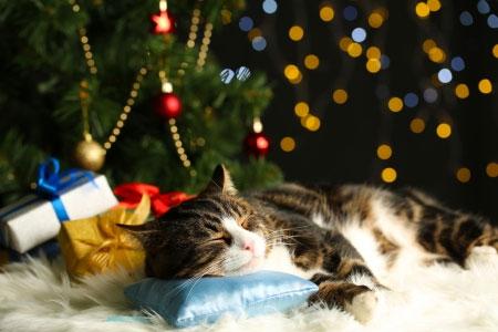 Noël : Des cadeaux pour les animaux mais pas d'animaux en cadeau…