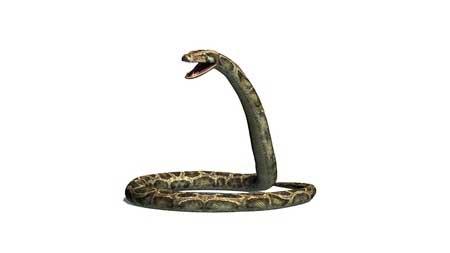 Rumeurs... Des chatons pour des pythons ?
