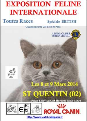 Exposition de chats saint quentin le 8 et 9 mars 2014 for Salon chat sexe