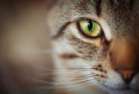 Signez la pétition visant à punir plus sévèrement les actes de cruauté commis sur les animaux.