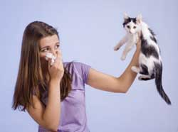 L'allergie aux chats ? C'est fini ! On traite... le chat !
