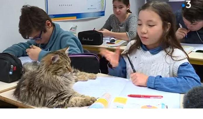 Dix chats à l'école !