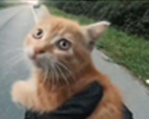 Il y a un petit chat au milieu de l'autoroute !