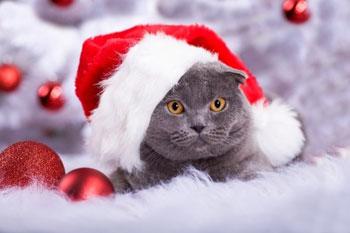 Donner un chaton comme cadeau de Noël : une bêtise.