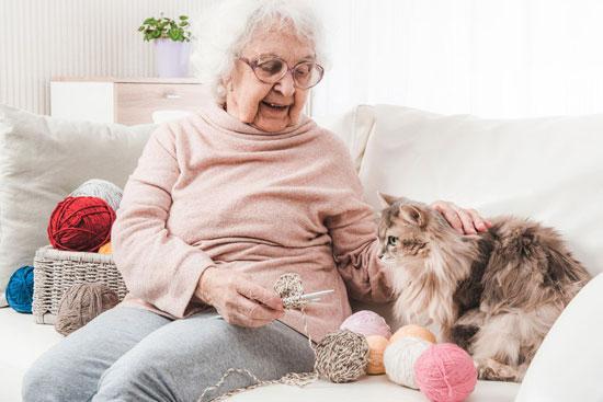 Un chat devenu aide-soignant à Jaunay-Marigny.