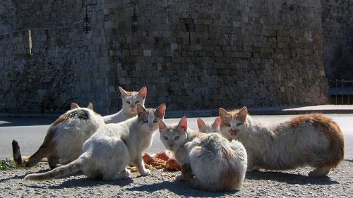 Dites non au gazage de 10.000 chats au Soudan ?