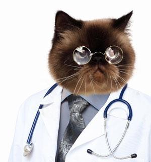 Le chat le meilleur des docteurs !