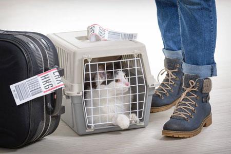 Le scandale du transport des chats en avion.
