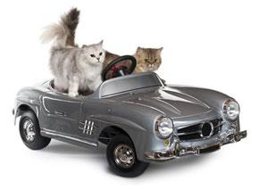 Le voyage en voiture de deux chats