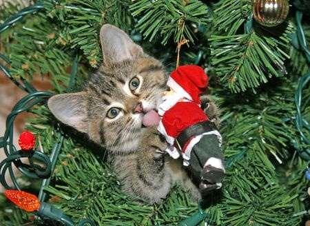 Le no l du chat pas toujours aussi joyeux que a - Image de chat de noel ...