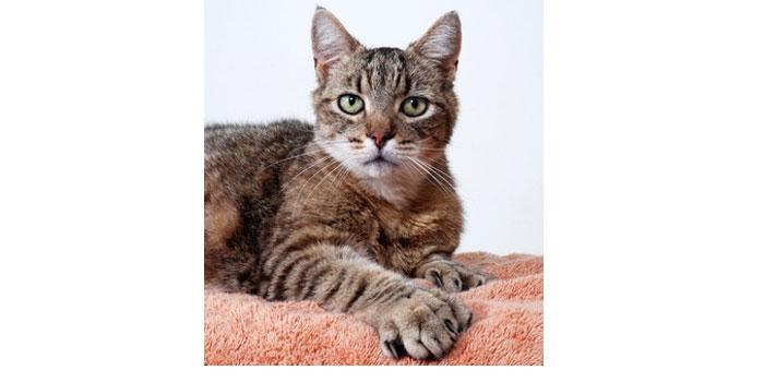 Une grosse inquiétude pour les 54 chats d'Hemingway suite à l'ouragan Irma.