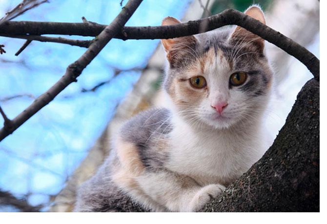 Sauvetage d'un chat bloqué dans un immeuble destiné à être dynamité