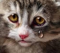 encore un acte de cruaut gratuit l 39 encontre d 39 un pauvre chat innocent. Black Bedroom Furniture Sets. Home Design Ideas
