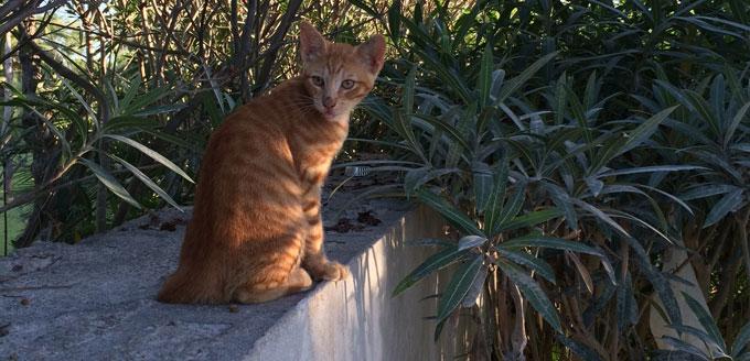 Un chat attend quinze jours avant d'être délivré.