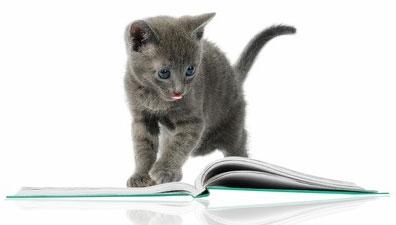 Pour « Ma plus belle histoire de chats », la décision finale qui viendra la consacrer approche.