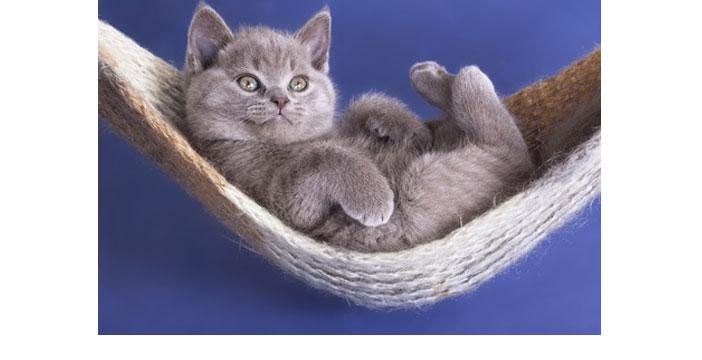Faire garder son chat pendant les vacances ou un déplacement...
