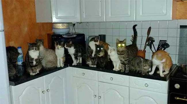 Patricia et ses 42 chats appellent à l'aide !