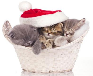 no l pour les chats sous l arbre ou dans l arbre. Black Bedroom Furniture Sets. Home Design Ideas
