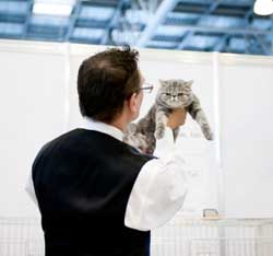 Exposition de chats à Saint Martin au Laert le 6 avril 2014