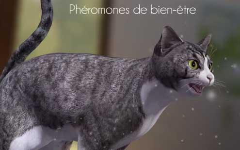 Cet été, le chat voyage avec vous ou reste à la maison ? Feliway peut vous aider.