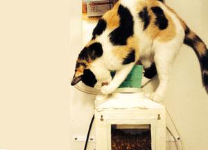 Galia ouvre elle-même le distributeur à nourriture de croquettes pour se servir toute seule !