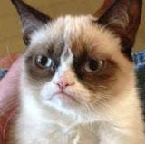 Grumpy Cat a été regardée plus de 52 millions de fois