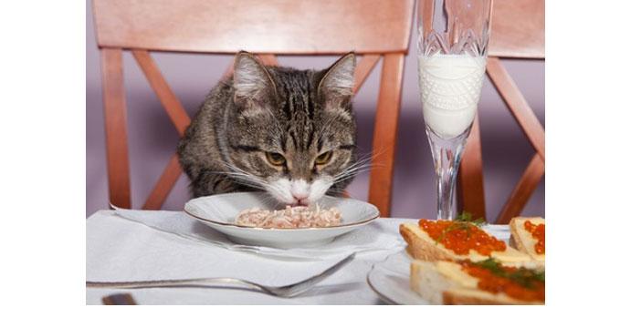 Demain Mardi 8 Aout 2017, c'est la journée internationale du chat.