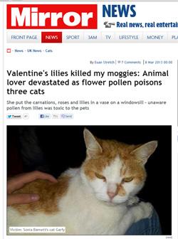 Aliments, plantes et produits dangereux pour chiens et chats Le-lys-poison-mortel-