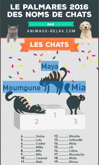 Découvrez le palmarès annuel des noms de chat les plus populaires en 2016 !