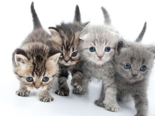 Pompon et Perle les noms préférés pour les chats en 2019.