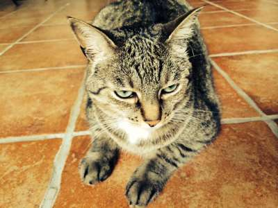 04092e36bc4c9 Les joies du parrainage. Les joies du parrainage. Vous aimez les chats ...