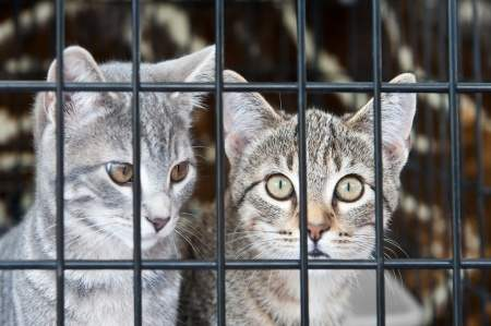 Condamnée à 30 mois de prison ferme pour maltraitance animale.