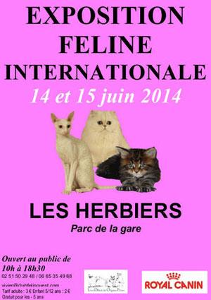 Affiche de l'Exposition Féline Internationale aux Herbiers le 14 et 15 juin 2014