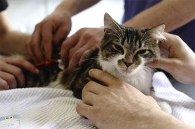 Suivre une formation aux premiers secours pour les chiens et chats.